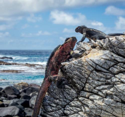 Unikt dyreliv Galapagos